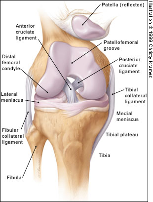Knee Diagram Quiz Block And Schematic Diagrams